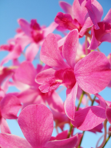beautiful-sunny-pink-orchid-flowers-photo