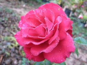 FLOWER (7)