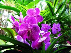 flowers-pictures-orchid-564-2